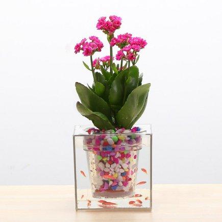 آکواریوم سون گرین مدل گلدان آبی - حجم 3 لیتر
